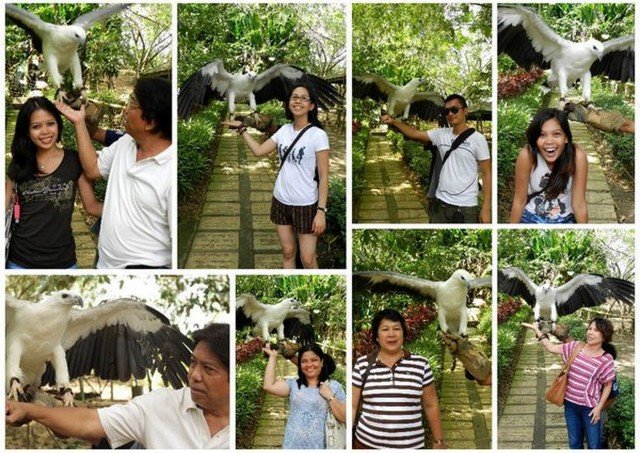 philippine eagle farm