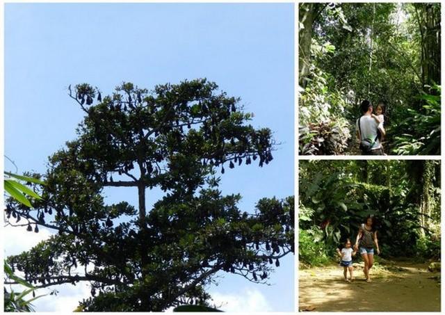 philippine eagle farm