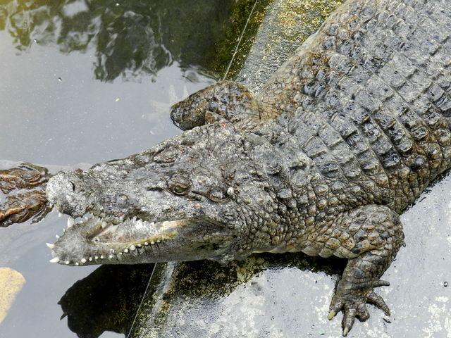 puerto princesa crocodile farm