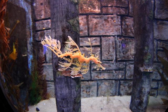 sea life melbourne aquarium
