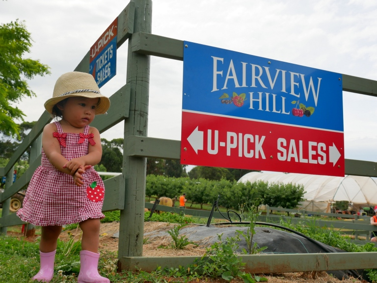 fairview hill cherry farm, wandin east, victoria, australia