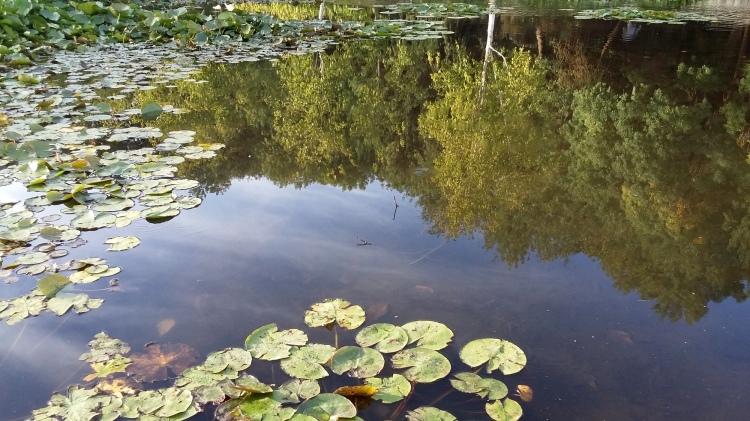 wilson botanic park, berwick