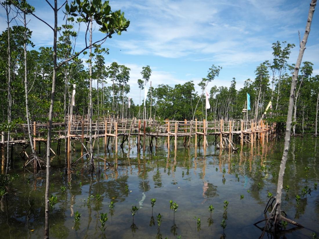 omagieca obo-ob mangrove garden, bantayan island, cebu